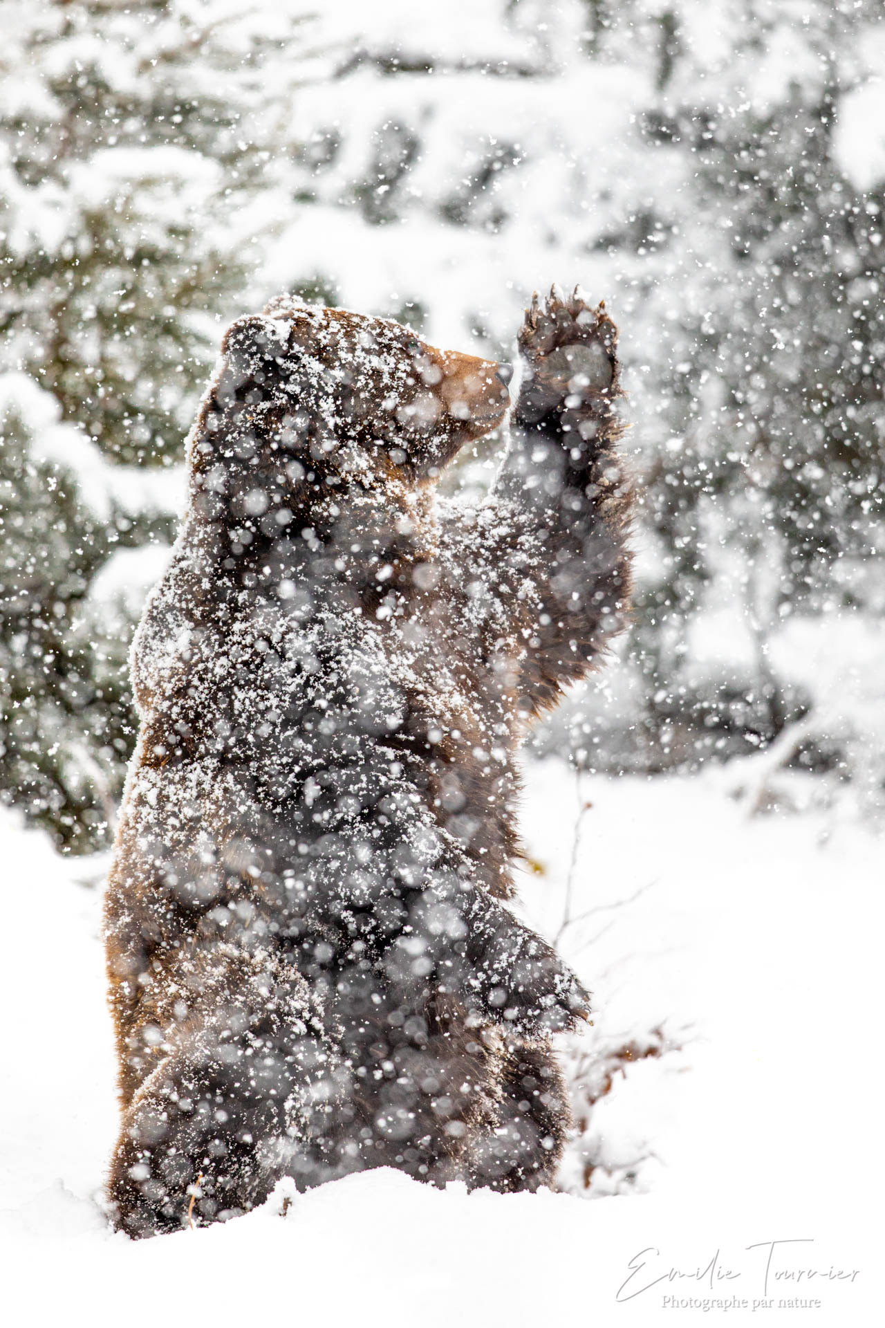 L'attrape-neige