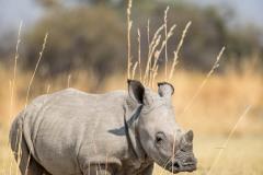 Botswana, de l'Okavango à Chobé