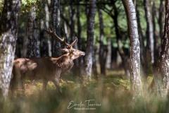 Le marcheur de la forêt