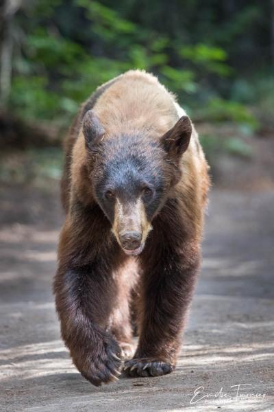 Sur le chemin de l'ourse