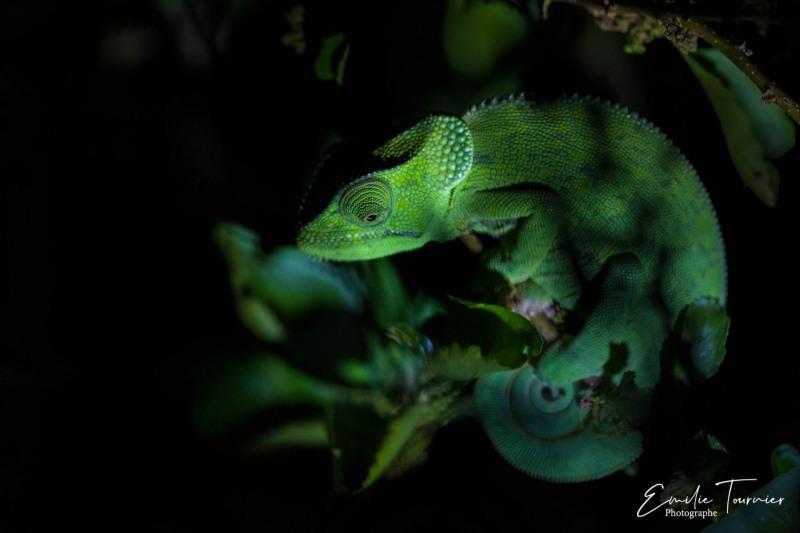Vert de nuit