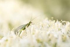 Prairie de pollen