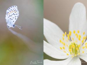 Photographies de fleurs et de papillons prise lors d'un stage photo macro à Courson