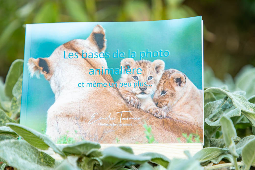 Photo Guide photo animalière